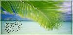 Daun kelapa